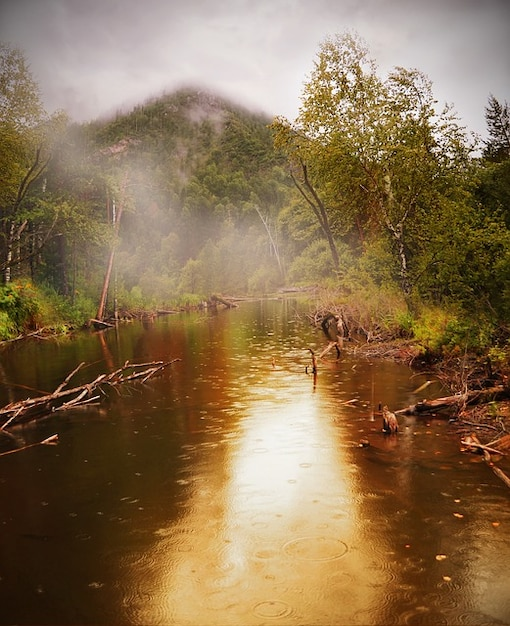 Water Summer Rain Forest Beauty Pond Fog Photo