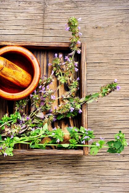 Nepeta,healing herbs and herbalism Premium Photo