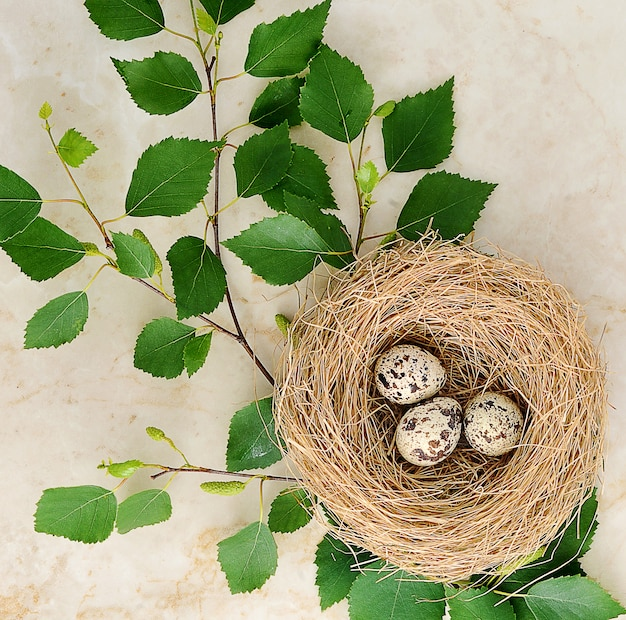 Nest with quail eggs and a birch twig on marble Premium Photo