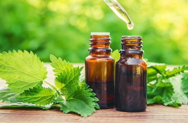 Nettle essence oil and fresh branches blooming nettle. Premium Photo