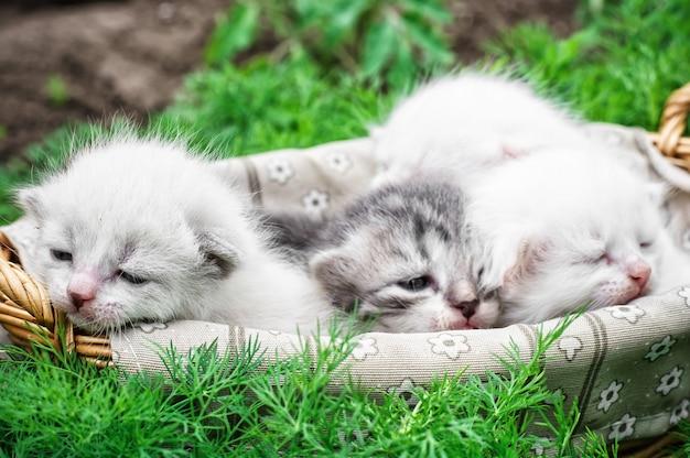 Newborn kittens Premium Photo
