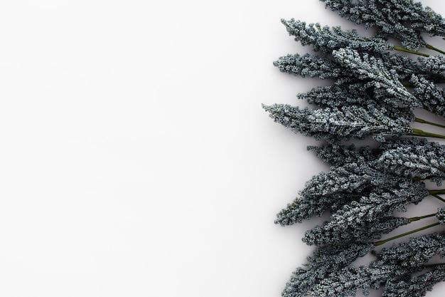 Хорошая композиция из листьев пшеницы на белом фоне Бесплатные Фотографии