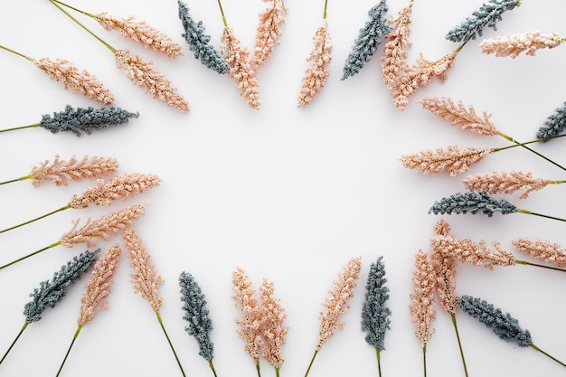 Nice composition made with wheat leaves on white background Free Photo
