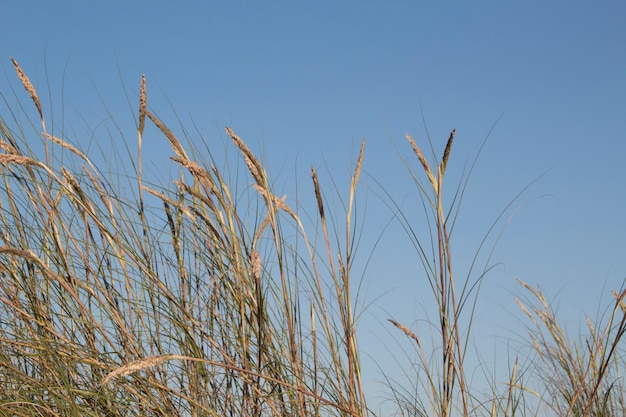 Nice grass against the sky Free Photo