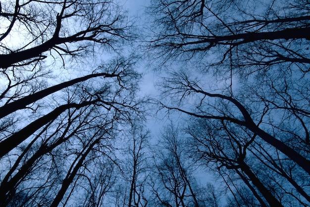 夜の森のシーン、暗い時間中の木の上から見る Premium写真