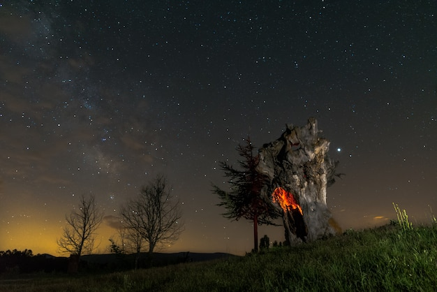 Night sky over an old lonely tree illuminated Premium Photo