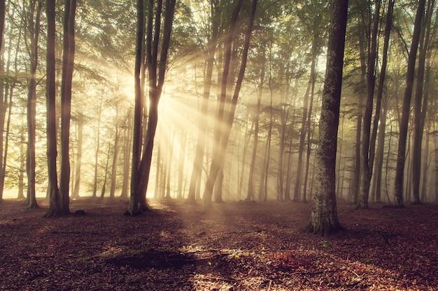 森の中の日光 無料写真