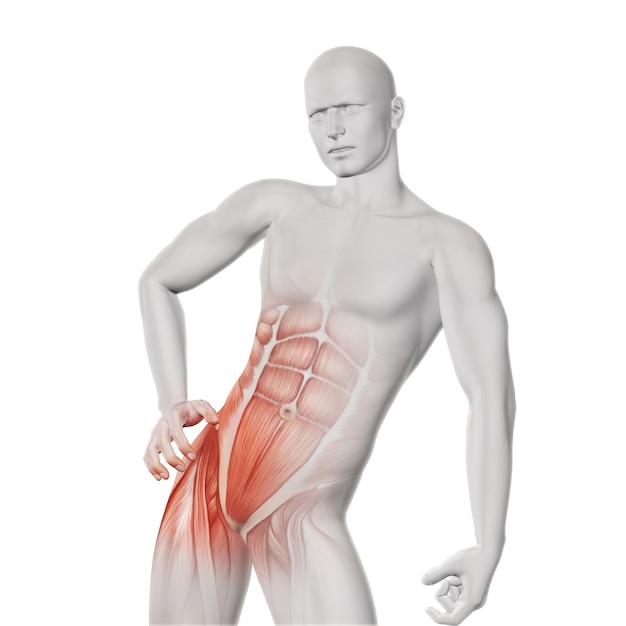 骨盤の筋肉stetch 無料写真