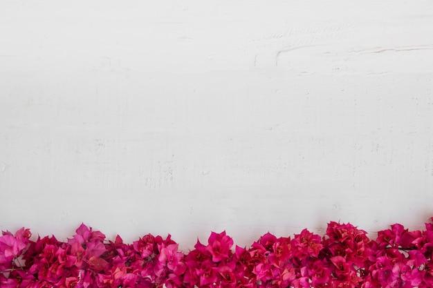 白い木の背景に花。空きスペース 無料写真