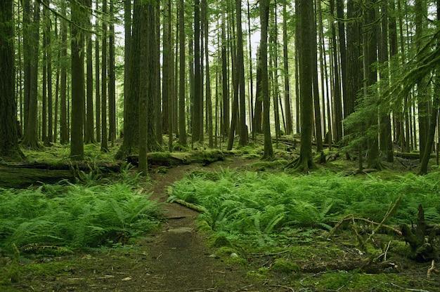 苔むじのある森の景色 無料写真