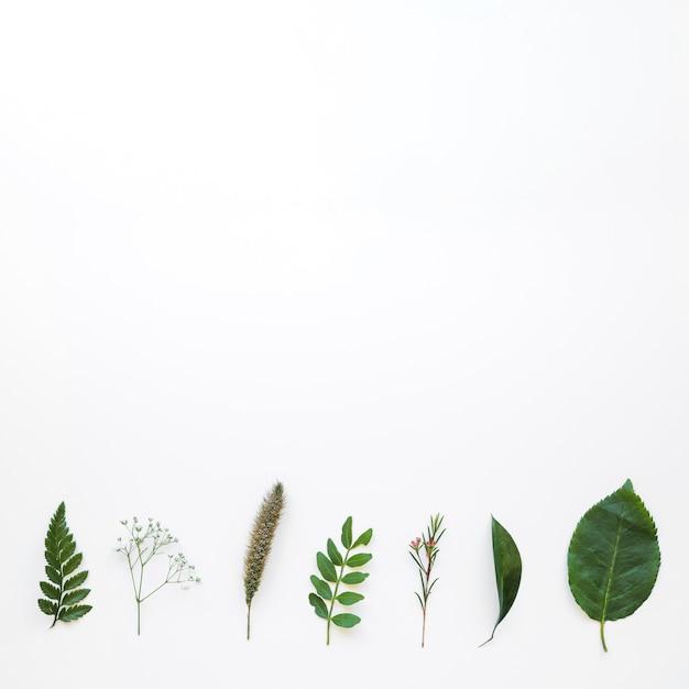 葉の組成 無料写真