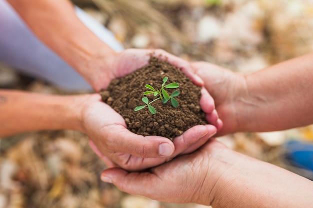 土壌と芽をつけた人々を刈る 無料写真