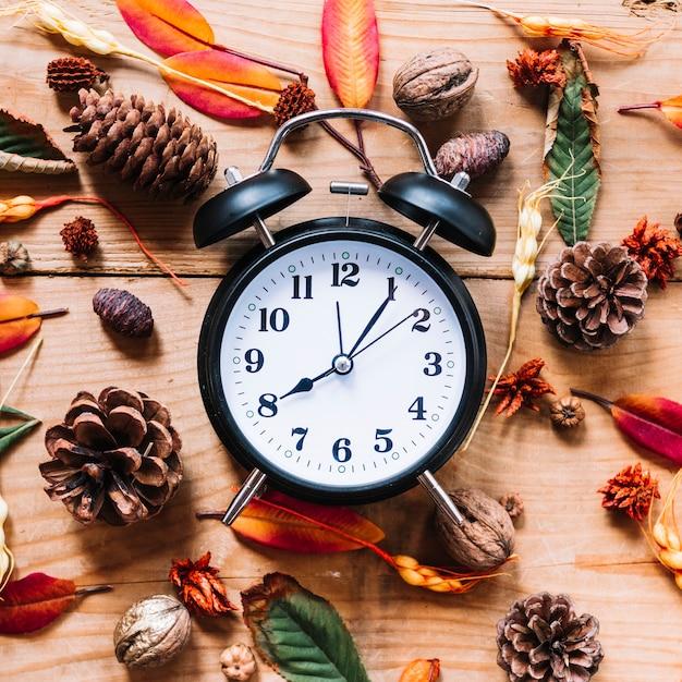 Будильник между цветами и листьями конусов Бесплатные Фотографии