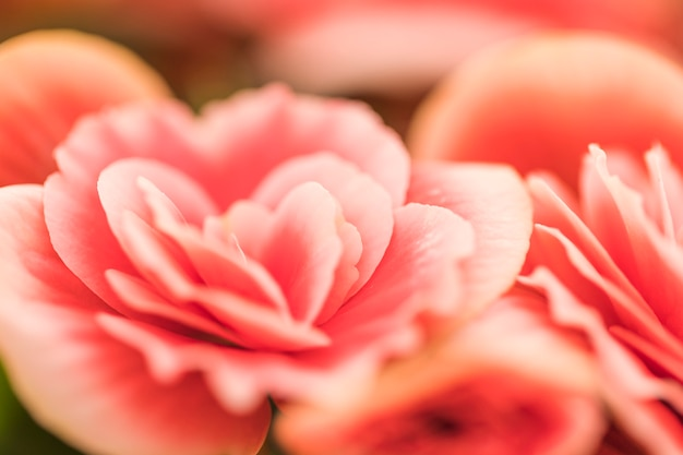 美しいピンクの生花 無料写真