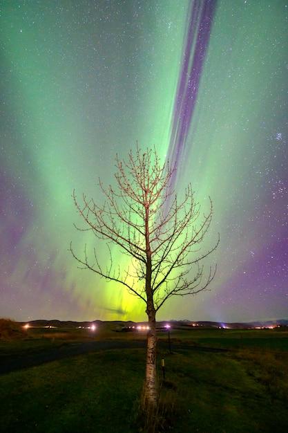나무 위의 아이슬란드 오로라 오로라 프리미엄 사진
