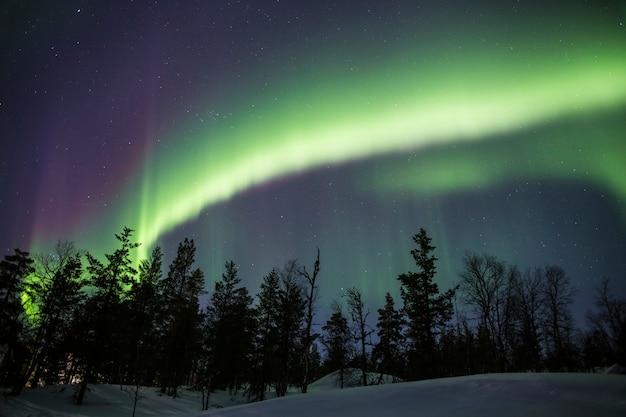 オーロラは雪に覆われた森の後ろの空全体を覆っています Premium写真
