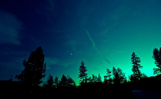 나무 위에 오로라 프리미엄 사진