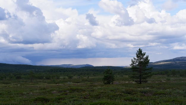 Northern tundra forest view from the hills in kola peninsula Premium Photo