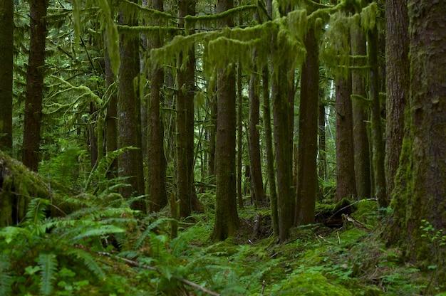 Nortwest us rainforest Free Photo