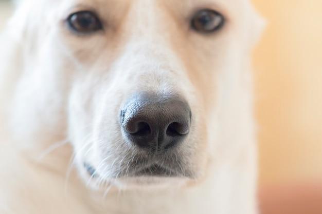 가벼운 강아지의 코 근접 촬영 머리 프리미엄 사진