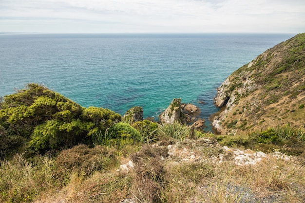 Nugget point in south island of new zealand Premium Photo