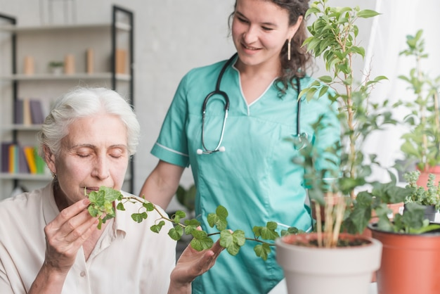 Nurse looking at senior female patient smelling ivy plant in the pot Free Photo