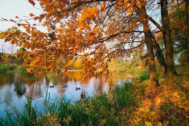 Дубовые ветви в солнечном свете на озере осенью. Premium Фотографии