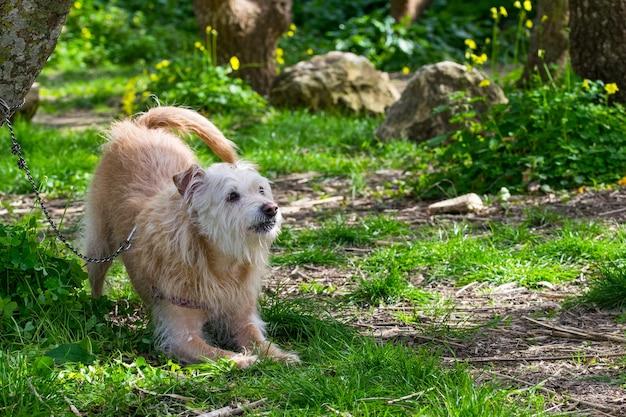 Cane beige obbediente che aspetta con impazienza il suo proprietario nella campagna maltese. Foto Gratuite