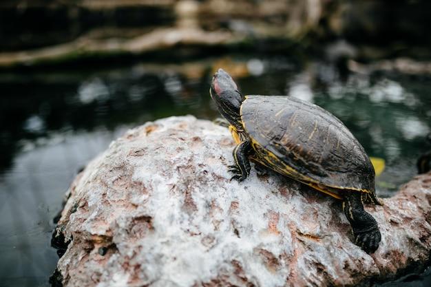 Ocean turtle Free Photo