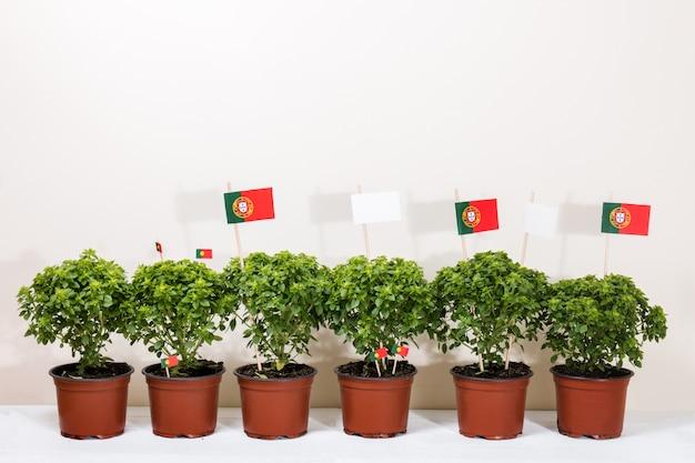 Ocimum minimum plants Premium Photo