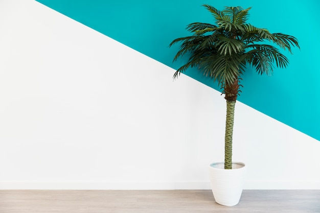 Office palm in front of wall Free Photo