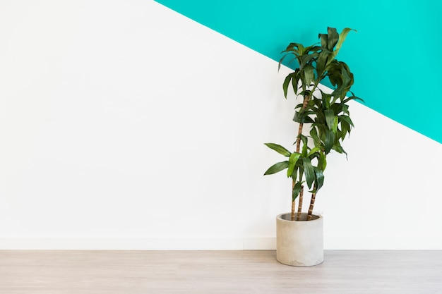 Office plant in front of wall Free Photo