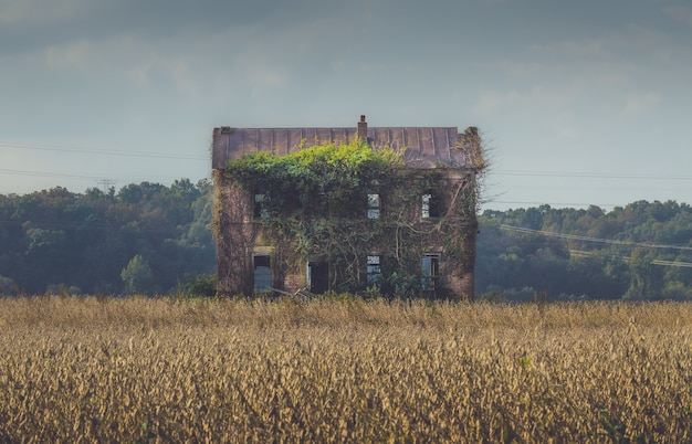 Old abandoned building overgrown by long vines in the middle of a field Free Photo