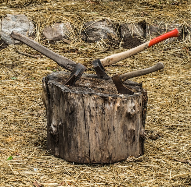 Old axe stuck in a stump, on  background of straw Premium Photo