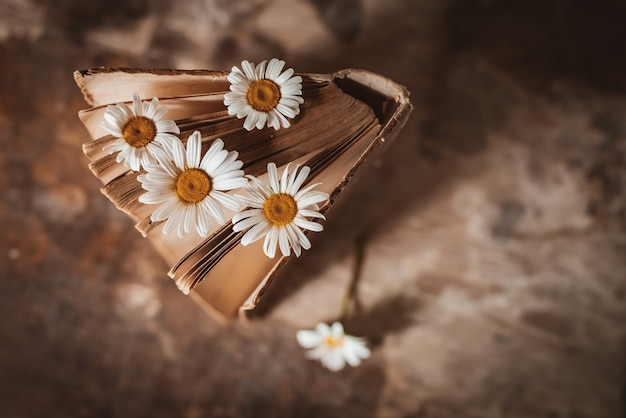 白いフィールドのヒナギクの花と古い本。 無料写真