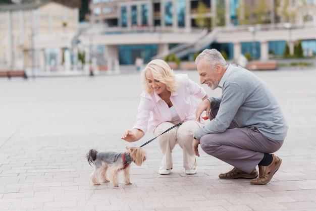 Old couple sat down pat dog. couple love story. Premium Photo