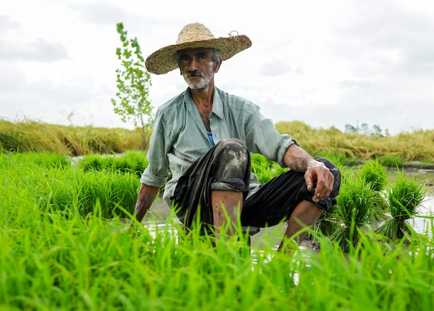 Old farmer working on rice plantation Premium Photo