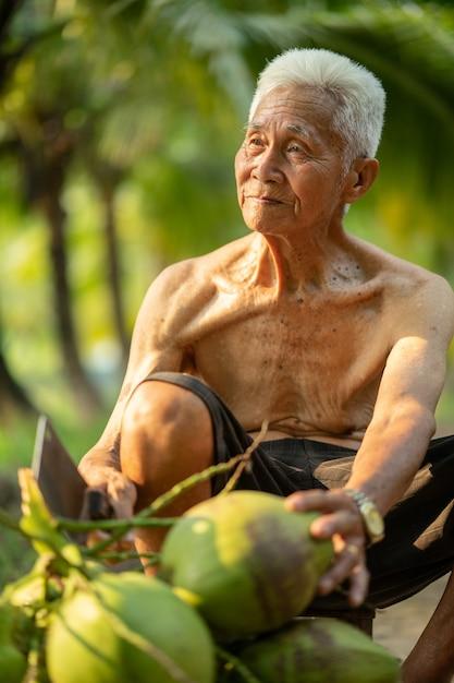 Old man collecting coconut in coconut farm in thailand. Premium Photo