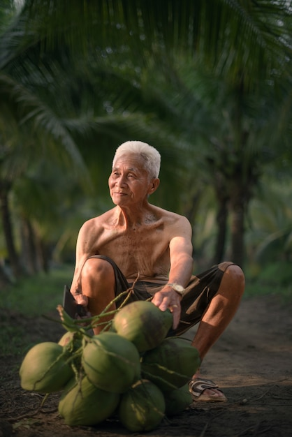 Old man collecting coconut in coconut farm Premium Photo