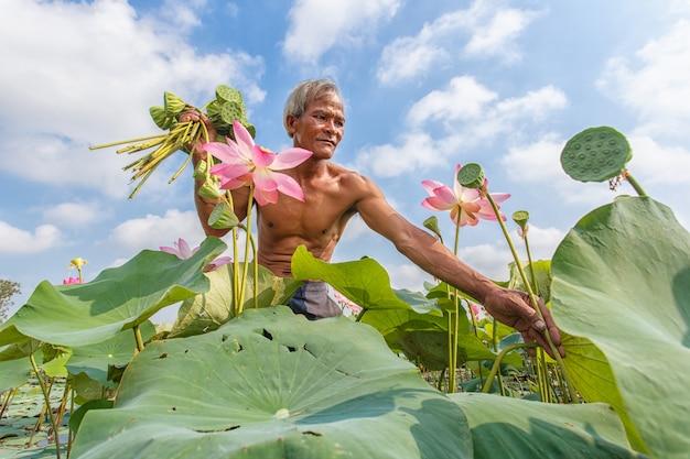 Old man thai farmer grow lotus in the season. Premium Photo