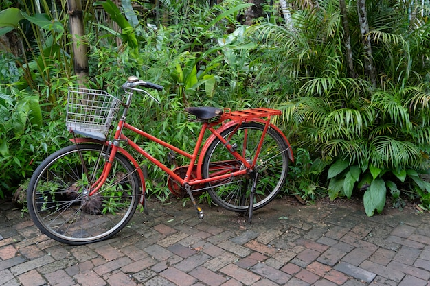 Old red bicycle in garden Premium Photo