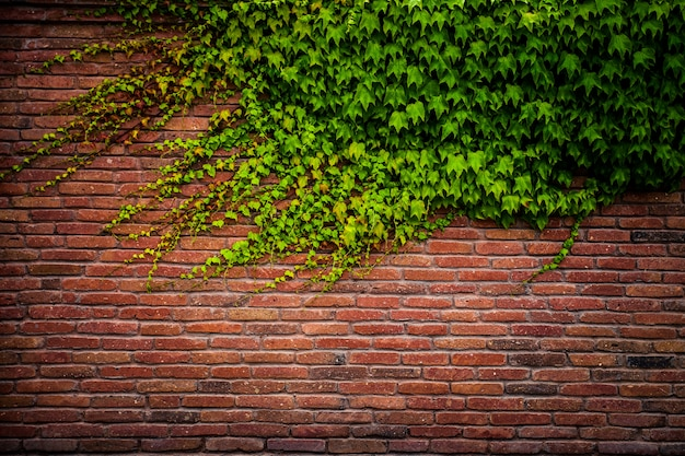 Old red brick wall texture and green leaf Premium Photo