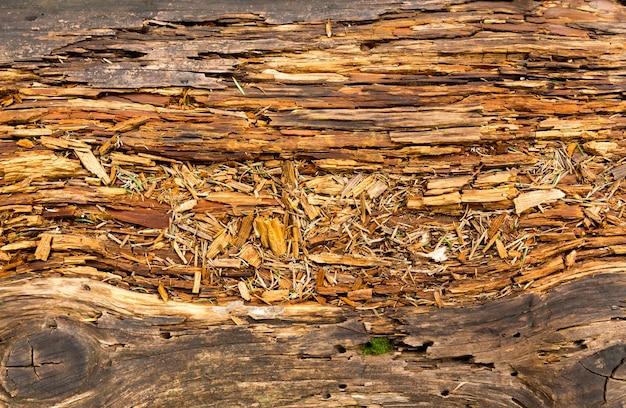 古い腐った木 Premium写真