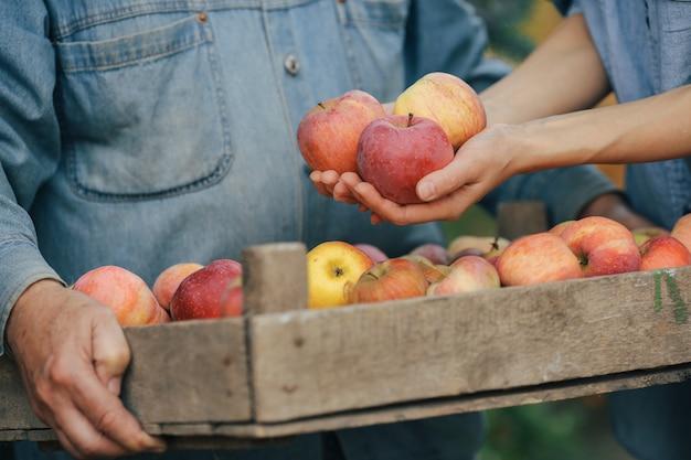 収穫と夏の庭に立っている古いシニア 無料写真