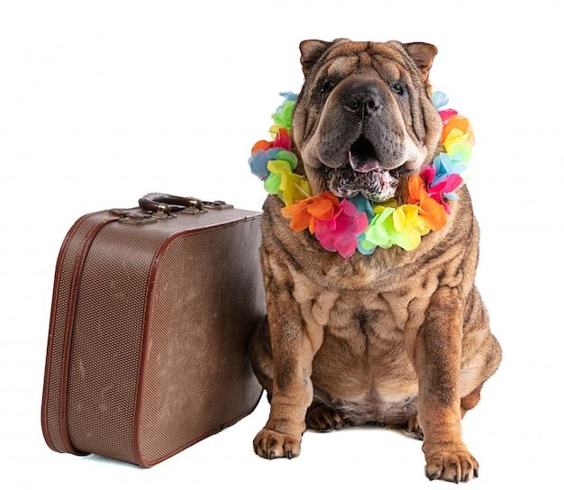 分離されたスーツケースを持つ古いシャーペイ Premium写真