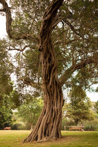 昼間の日光の下でシドニー植物園の古い木 無料写真