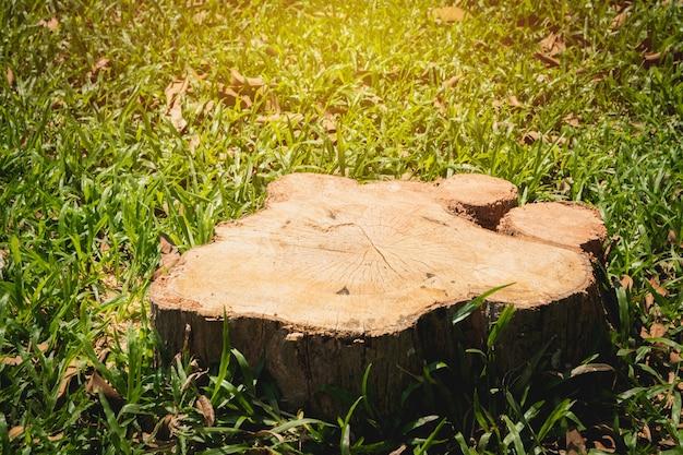 Old tree stump on green grass field garden Photo Premium Download