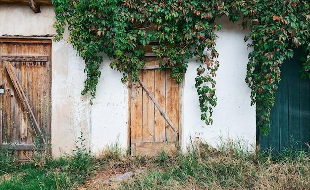 Vecchio tentativo con una porta di legno ruvida, un vecchio muro con intonaco fatiscente, ricoperto di uva selvatica. distruzione naturale della struttura Foto Gratuite