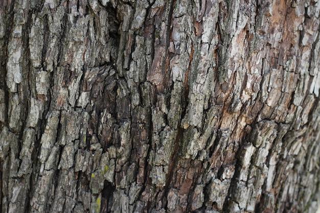 Old Wood Bark Tree Texture Background Pattern Photo