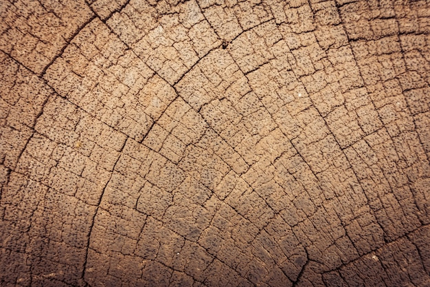 Old wood textures Free Photo